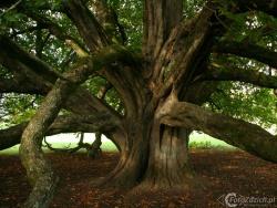 Forest Park Boyle IMG 6941