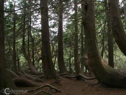 Forest Park Boyle IMG 7549