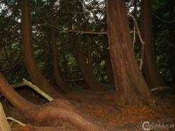 Forest Park Boyle IMG 7554