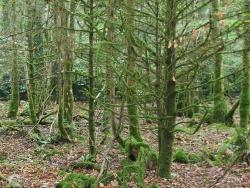 Forest Park Boyle IMG 7567