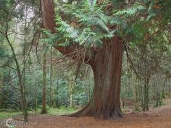 Forest Park Boyle IMG 7572