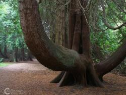 Forest Park Boyle IMG 7599