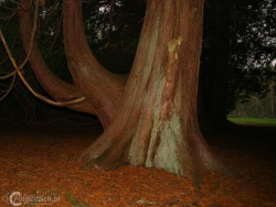 Forest Park Boyle IMG 7608