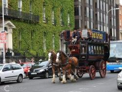 Ulice Dublina IMG 4448