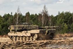 Leopard 7934