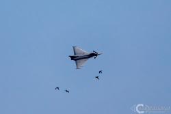 Eurofighter 1280