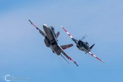 Hornet i Morane C 3801 3385